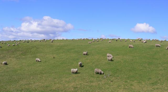 ニュージーランド産の安心安全なフリーズドライフード