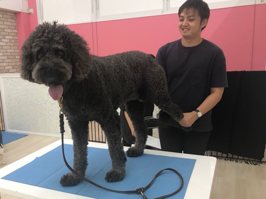 大型犬ストレッチ